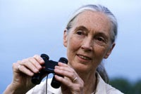 Jane Goodall.  Photo courtesy the Jane Goodall Institute/Bill Wallauer